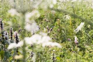 Wilde Wiese mit Bienen bei Lüneburg von der umweltfreundlichen Druckerei von Stern'sche