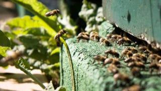 Bienen produzieren Honig auf der Wildwiese von der umweltfreundlichen Druckerei von Stern'sche