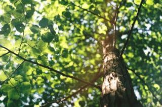 Von Stern'sche Druckerei Baum Umwelt