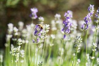 Von Stern'sche Druckerei Biene Wildwiese